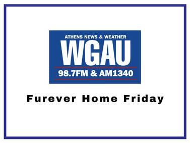 Furever Home Friday