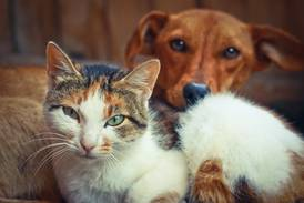 Weekend adoption event at Oconee Co Animal Shelter